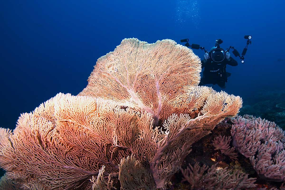 Scuba Diving in Malaysia