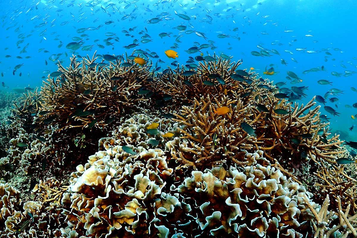Scuba Diving on Tioman Island in Malaysia